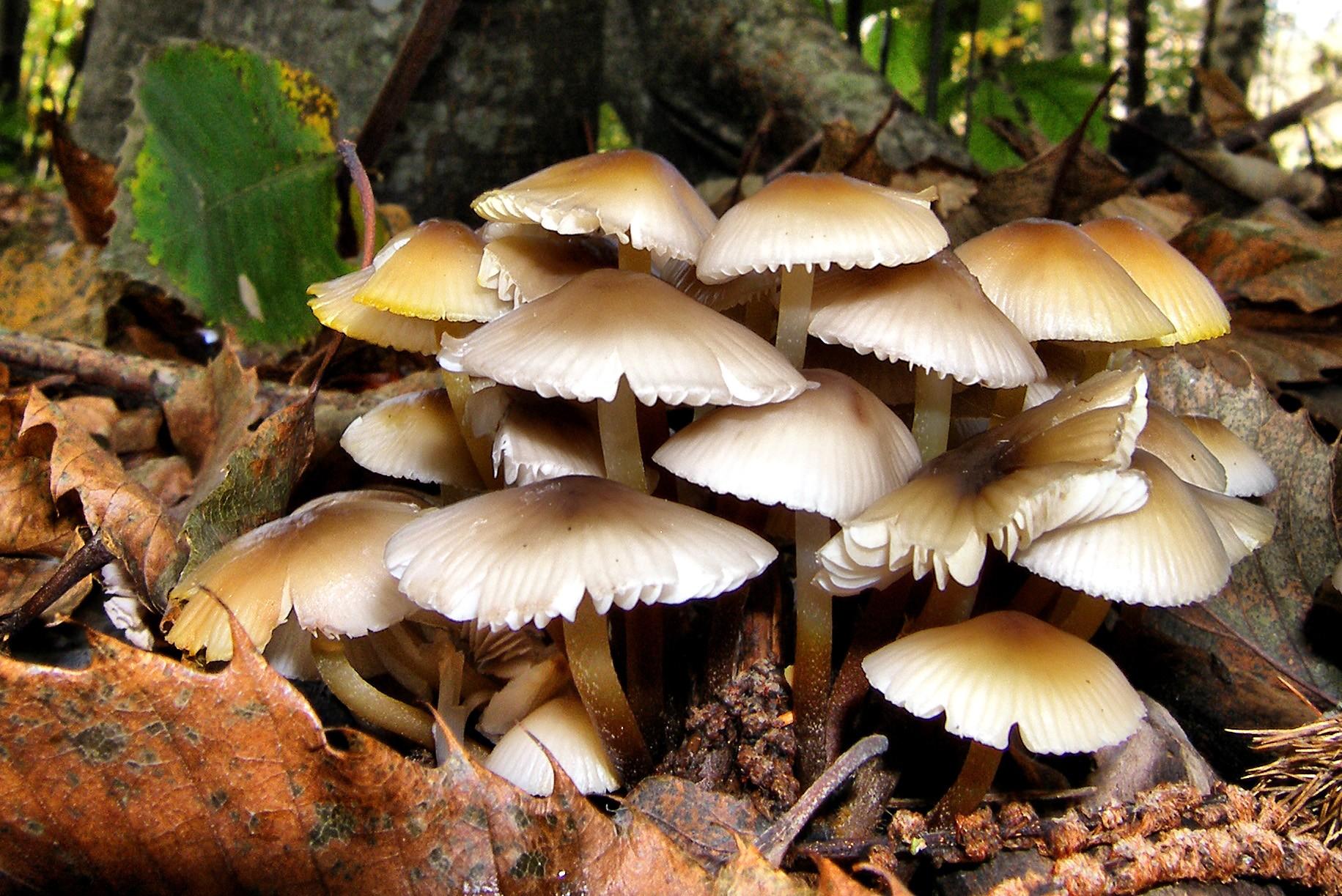 mushrooms_4b2c783421b2f_hires.jpg